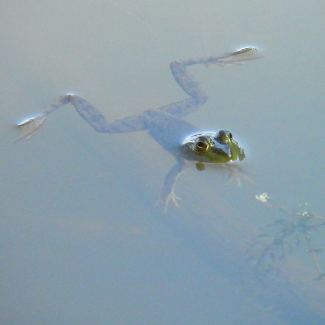 Frog at Tifft Preserve