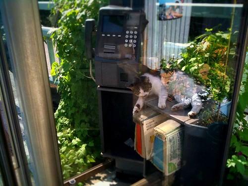 昨日、電話ボックスの中で寝ていた猫が、また寝てた!