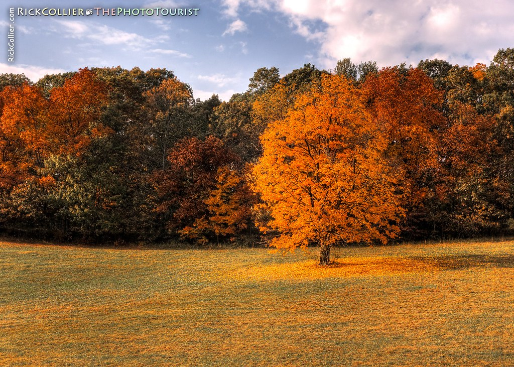 HDR image of a maple tree standing in a puddle of its own dropped leaves, West Wind Farm, Max Meadows VA