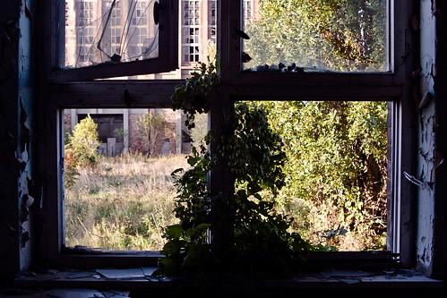 Zimmerpflanze / indoor plant