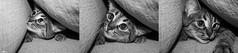 Luuuua (JennyOm) Tags: blanco cat canon negro bn gata lua jennyom