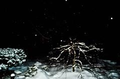 DSC_0028 (Kelly Schott) Tags: newyorkcity bridge winter sky people cloud snow eastvillage newyork tree window water skyline brooklyn buildings boat newjersey snowman manhattan southstreetseaport snowball blizzard 3rdavenue 12thstreet greenwichvillage 2010 snowballfight 2011 brookylnbridge snowpocalypse newyorkcityinwinter