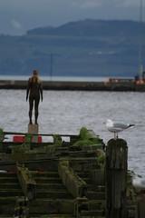 Antony Gormley -  Leith (ianharrywebb) Tags: birds antony gormley iansdigitalphotos
