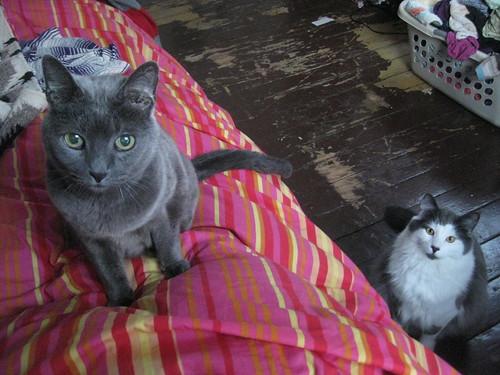 Distilled Feline Evil February 2011 003