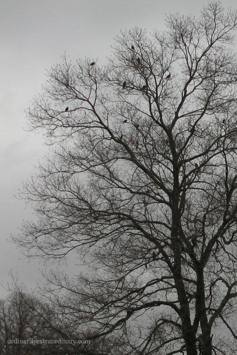 Feb252011_0001Aweb