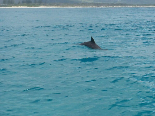 Dolphin in Byron Bay