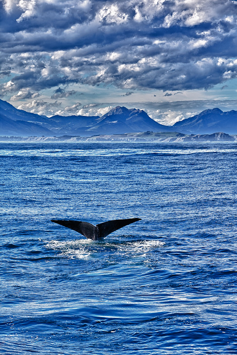 Whale-tail-kaikoura-new-zealand