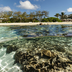 Undercover turtle || Lady Elliot Island (David Marriott - Sydney) Tags: queensland australia au qld turtle split overunder lady elliot island great barrier reef sand water sea ocean fotofenzy canon collective