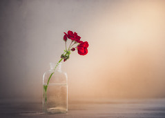 Simple red (Ro Cafe) Tags: red stilllife flower geranium bottle naturallight nikkormicro105f28 nikond600