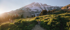 anticipating paradise, part five (manyfires) Tags: film analog landscape pnw pacificnorthwest washington mtrainier mtrainiernationalpark nationalpark hike hiking outdoors mountains nikonf100 35mm sunset golden magichour trail path glow panoramic panorama skylinetrail paradise wildflowers
