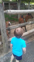 """Paul at the Deanna Rose Children's Farmstead • <a style=""""font-size:0.8em;"""" href=""""http://www.flickr.com/photos/109120354@N07/35659212336/"""" target=""""_blank"""">View on Flickr</a>"""