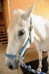 Helen (Montgomery Area Nontraditional Equestrians (MANE)) Tags: al mane pikeroad