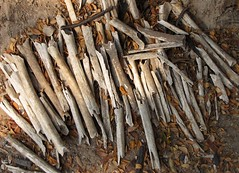 Killing Fields - Collection of Human Bones