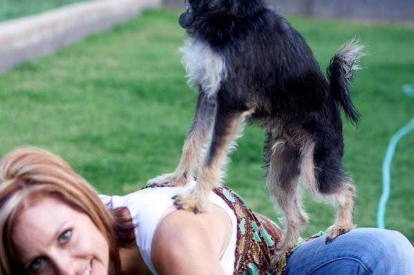 goat_dog
