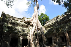 Ta Prom (Jason's Travel Photography) Tags: sky tree cambodia angkorwat taprom siemriep