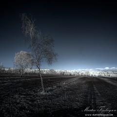 Subtle Light and Long Shadows (Martin_Finlayson) Tags: blue sunset white tree ir fire nikon shadows d70 gimp surrey burnt heath infrared common tamron hdr desolation subtle frensham photomatix 720nm 1024mm