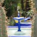 Giardini Majorelle_11