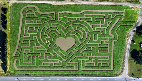 "Portland Pumpkin Patch Open Today With ""Heart In Oregon Maize"""