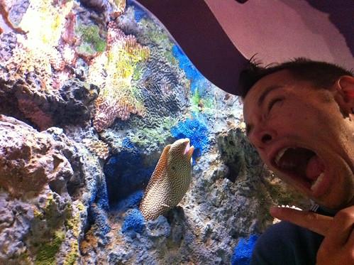 I Hate Eels