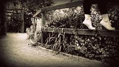 hbm ~ teeter (vanessa_r) Tags: fence bench teeter chucks tiptoe hbm benchmonday happybenchmonday givingmycanklessomelove