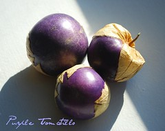 Purple Tomatilloes