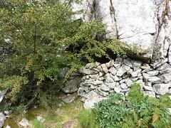 Abri-bergerie proche de la piste forestière de Castellucciu