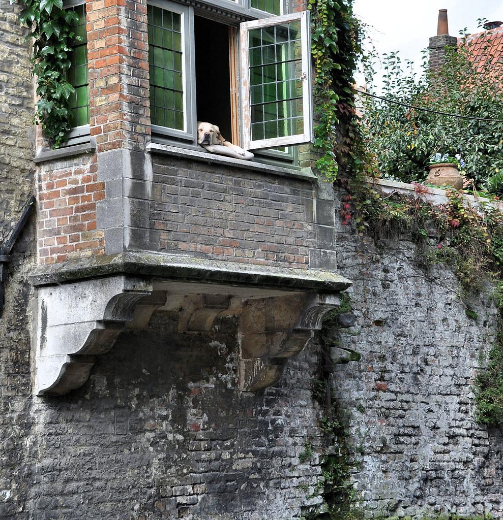 Bruges - let sleeping dogs lie or it's a dog's life