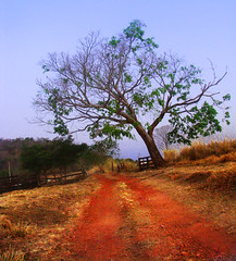 It's Been There All Allong... (osvaldoeaf) Tags: road blue brazil tree nature beautiful grass leaves rural america landscape farm interior branches south country dry poetic cerrado sly goinia bucolic gois trindade idilic