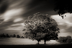 Behind the Haunted Wood (Neal.) Tags: wood longexposure sky blackandwhite tree field clouds canon ir scotland cattle haunted filter infrared borders berwickshire duns niffty clanflickr cokinp007infrared