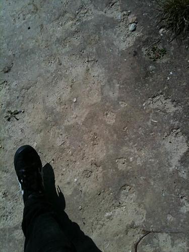 mauthausen walk