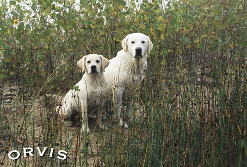 Orvis Cover Dog Contest - Sophie & Chloe