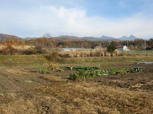 片付け終わった私の畑(手前)と八ヶ岳連峰 09年11月8日  by Poran111