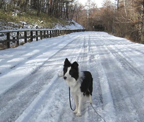湿った雪道を散歩するランディ 09年12月12日9:46 by Poran111