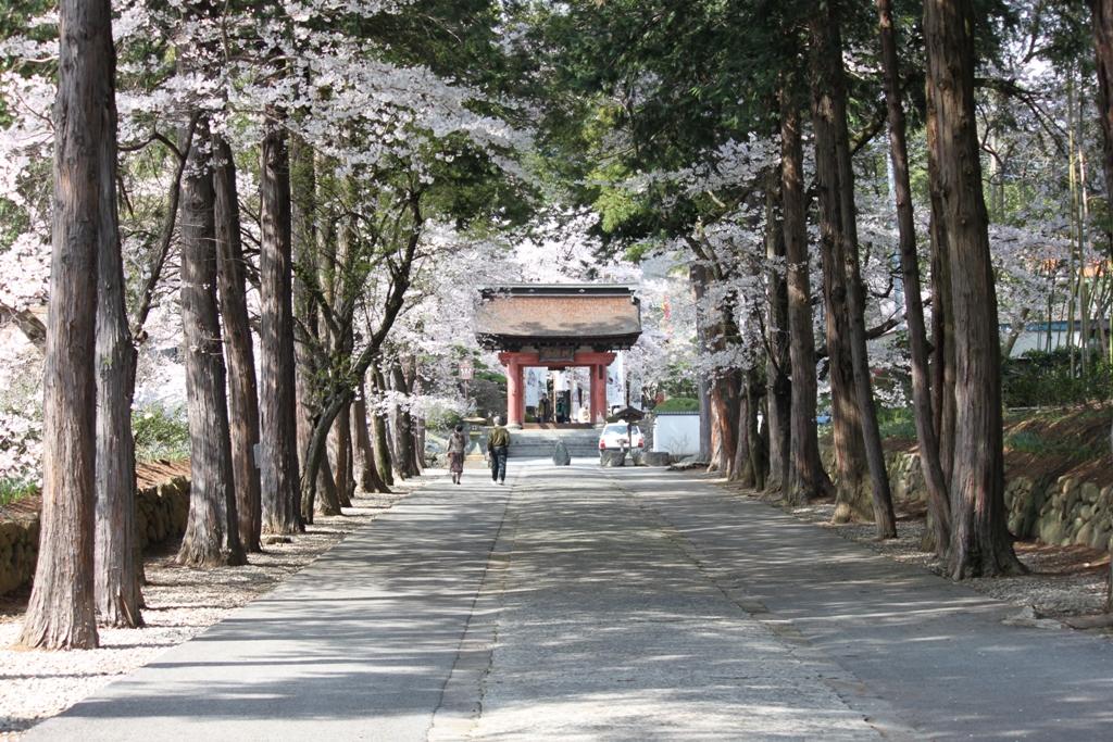 Sakura tour in Yamanashi (16)