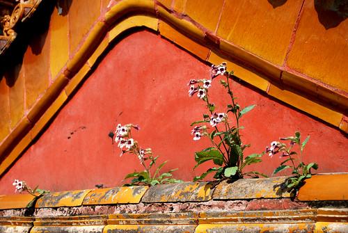 r57 - Ningshou Palace Flowers