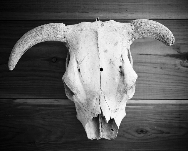 skull_1010112