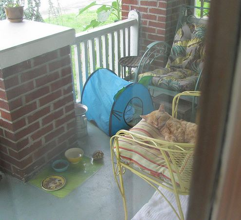cute ginger feral cat napping on porch