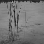 Reflect on the murk thumbnail