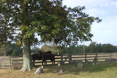 Horses and a home burial plot on our ride