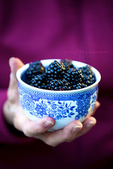 Blackberrying (*Les Hirondelles* Photography) Tags: light italy food black macro cup closeup fruit canon italian focus poetry italia poem berries dof hand blackberry purple bokeh quote violet line more mano getty poesia viola bacche frutta cibo blackberries gettyimages verso italiano sylviaplath tazza mora macrolens quoting blissful porpora citazione blackberrying leshirondellesphotography