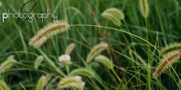 Sep042010_0094 crop copy