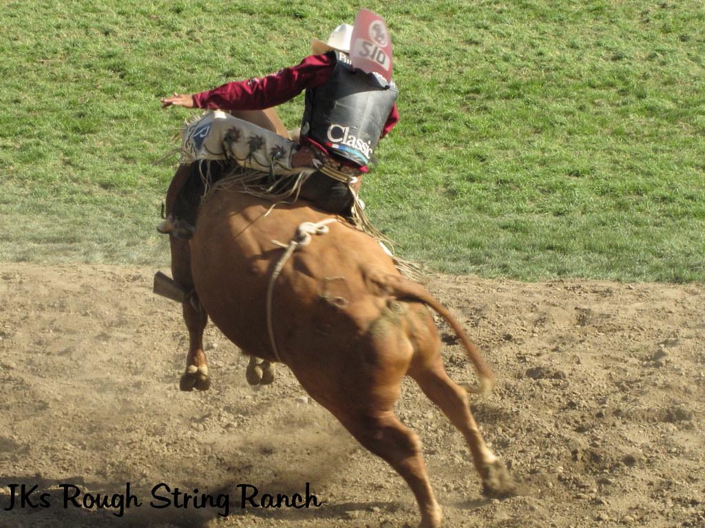 Ride a Bull!!