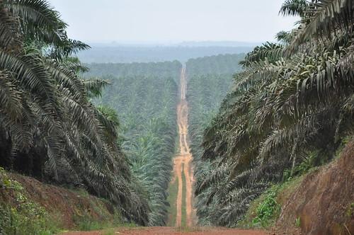 Palm plantation sea