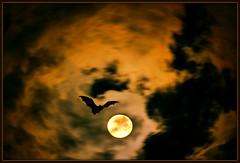 Moon Landing (Doug Wallick) Tags: moon halloween minnesota clouds cool cloudy bat eerie front full landing deck page new