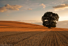 Summer Evening (jactoll) Tags: light shadow summer tree clouds rural landscape evening countryside oak nikon searchthebest farmland explore nikkor 1001nights frontpage warwickshire vr stubble d60 greatphotographers alcester warks idream platinumheartaward 1685mm rubyphotographer redmatrix bestofmywinners mygearandmepremium mygearandmebronze mygearandmepremiumaward jactoll