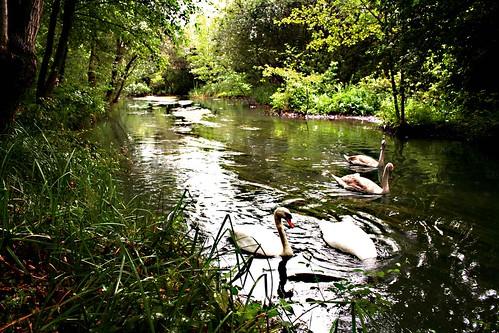 Parco sul Sile (2008.09.07) 068