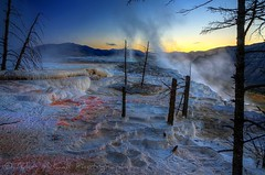 Mammoth Hot Springs at Sunrise (Tyler McCall) Tags: color tree yellow sunrise spring steam yellowstonenationalpark yellowstone ynp mammothhotsprings canonrebelxs canonefs1755mmf28isusm canoneos1000d tylermccall