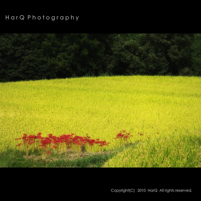 Harvest Season *