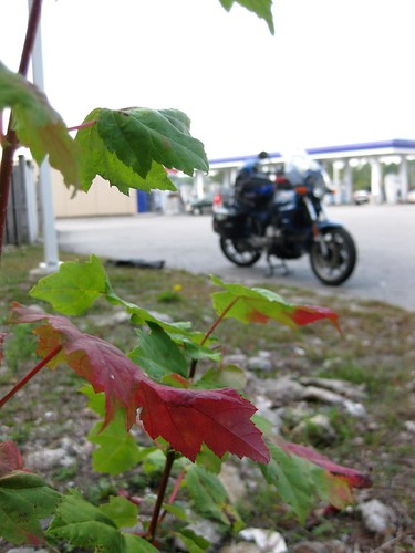 Gas Station Foliage