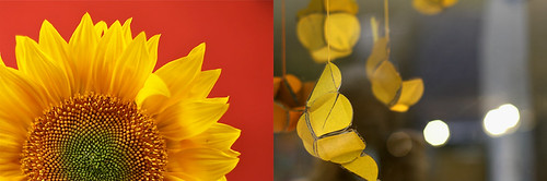week 41: dandelion